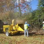 Stump Grinding & Chipping